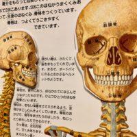 頭蓋骨小顔矯正・勉強中です